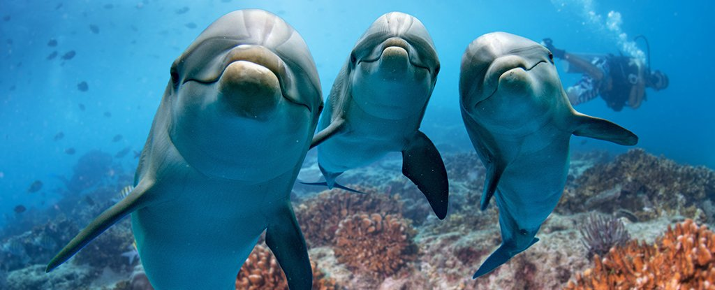 Whale And Dolphin Social Lives Are Surprisingly Similar to Ours, Says New Study