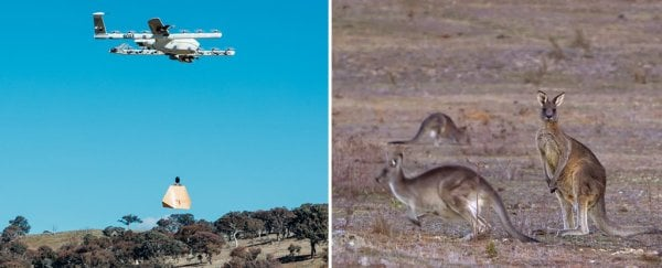 A small Australian town is getting burritos and aspirin delivered with drones