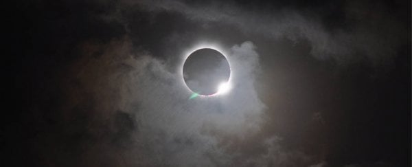 How did animals react to the solar eclipse? Here's some reports on their weird behaviour