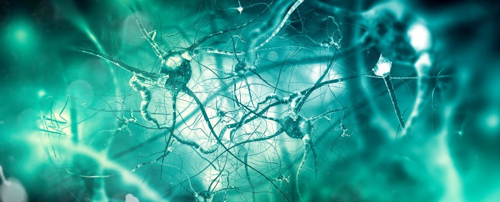 This Exercise Routine Could Intensify The Growth And Development of New Brain Cells