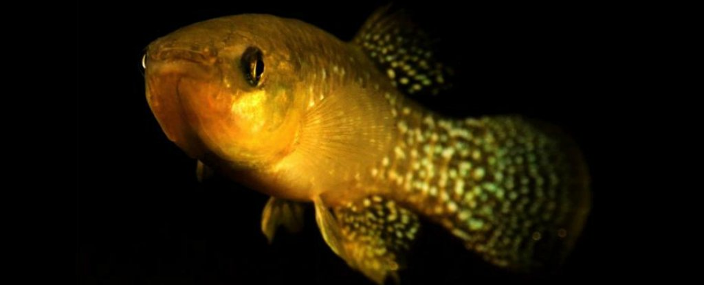 Scientists Discover Mutated Fish That Have Become 8,000 Times More Resistant to Toxic Waste