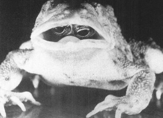 frogs-inside-pussy