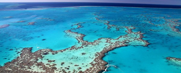 A massive reef was just discovered hiding behind the Great Barrier Reef