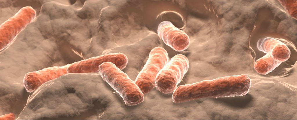 microbial communities found within the human body The research released last month involved the sequencing of the microbial communities of 242 healthy adults, focusing on colonies found on the skin and in the mouth, nose, gut and vagina.