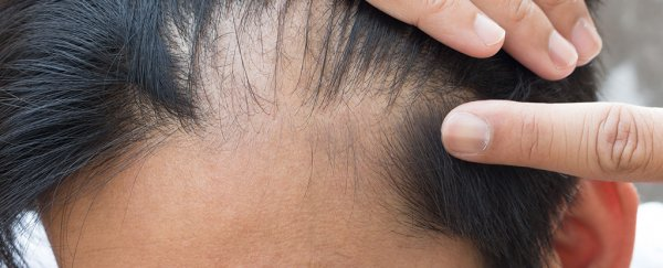 We now have the first evidence that immune cells in the skin directly trigger hair growth