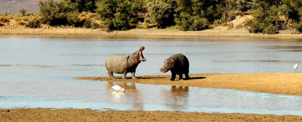 The last time Earth was this hot, hippos lived in Britain