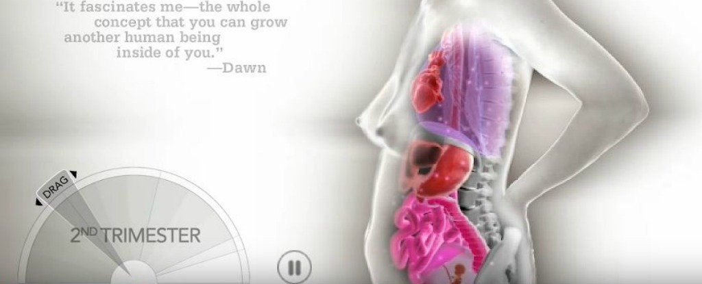 This Crazy Animation Shows How Organs Shift During Pregnancy