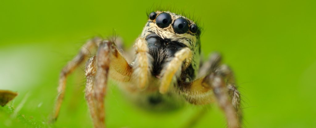 twitter worked out that jumping spiders can see the moon