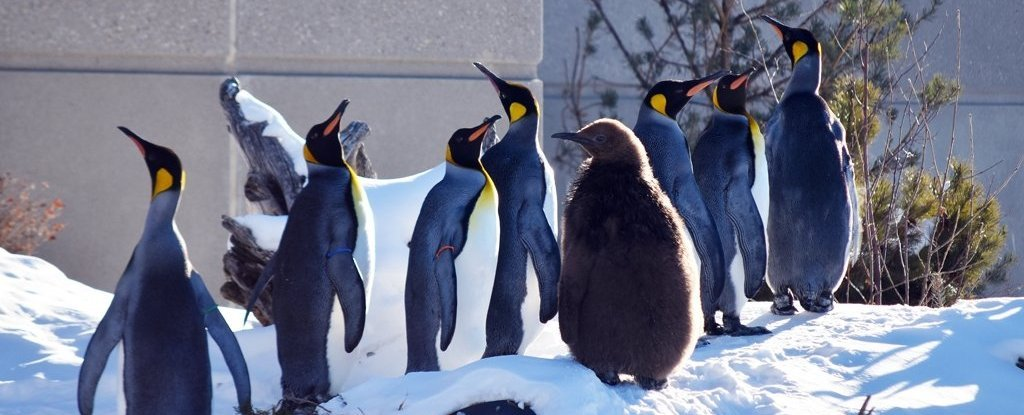 It's So Cold in Canada a Zoo Had to Bring Its Penguins Inside