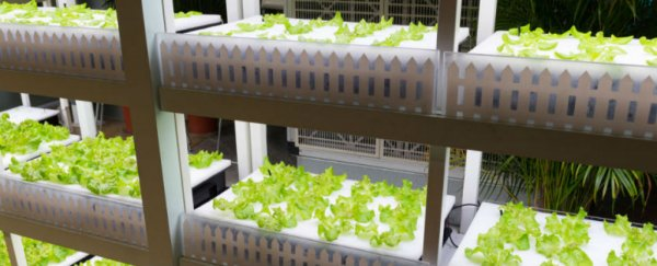 A Japanese company is building the world's first autonomous farm