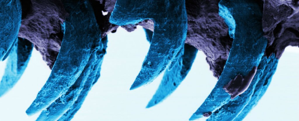 Scientists Discover The Strongest Known Natural Material in The World