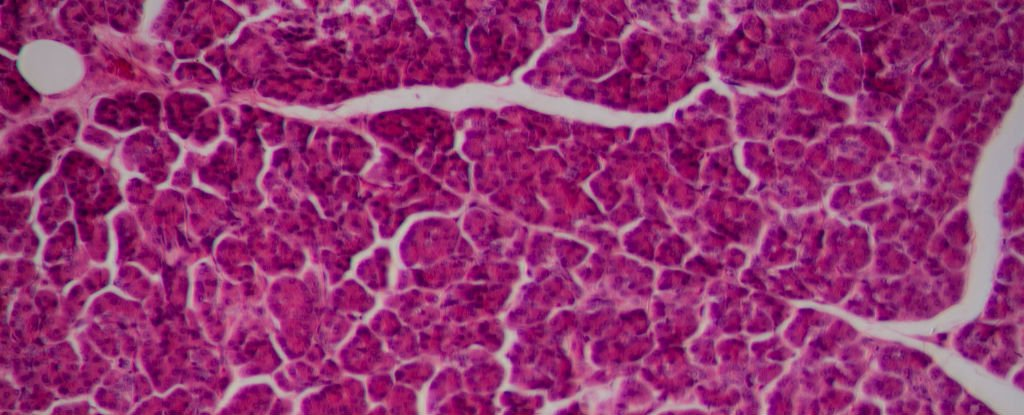 Scientists Produce The Most Realistic Lab Grown Liver Tissue Yet