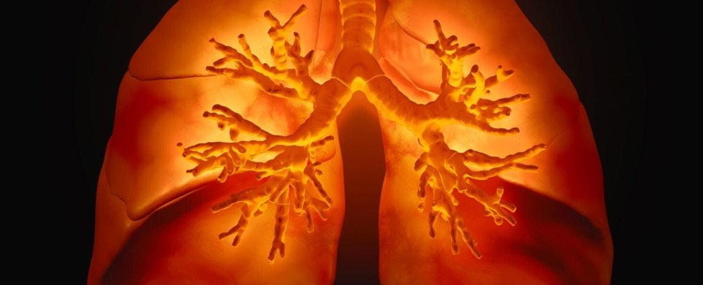 Bioengineered Lungs With Intact Blood Vessels Just Came One Step Closer to Reality
