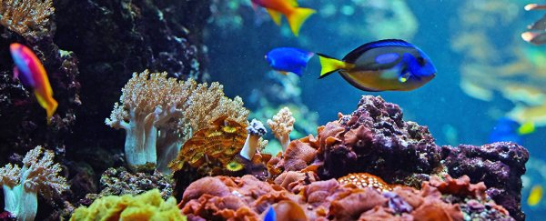 Marine Ecosystems Can Survive The Worst Mass Extinction