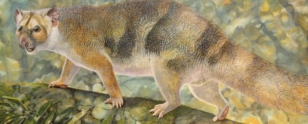 An extinct 600-gram 'micro-lion' has been discovered in Australia