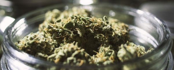 The Truth Behind The 'First Marijuana Overdose Death'