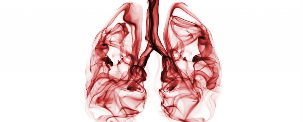 Scientists Create Mini Lungs To Fight Cystic Fibrosis