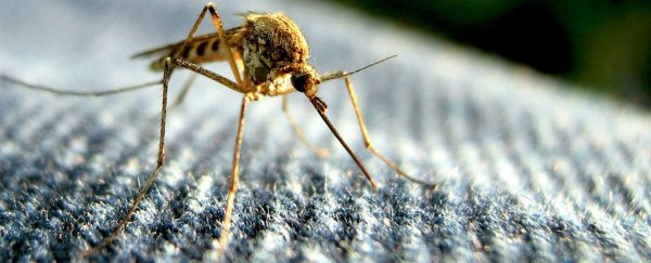 Why don't we wipe mosquitoes off the face of the Earth?