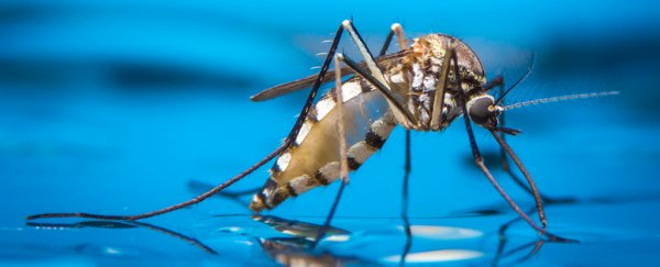 Mosquito-borne diseases could be wiped out for good with gene-editing