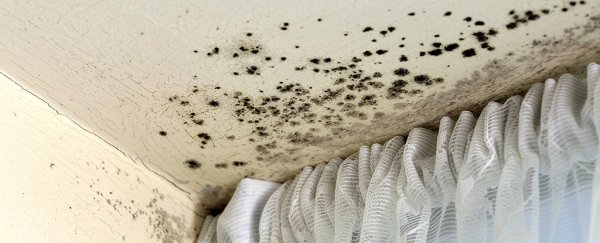 Researchers find mould toxins can easily become airborne indoors