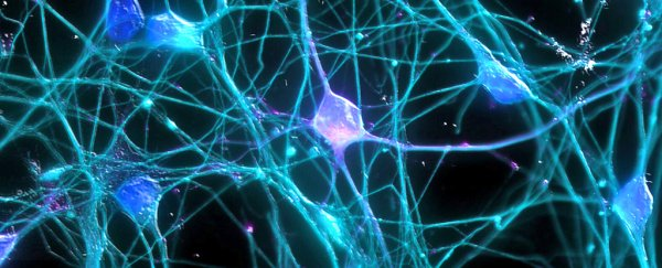 Scientists have figured out how to help nerve fibres repair themselves