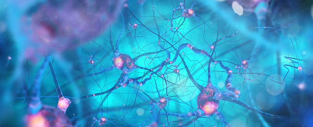 a confused immune system could be behind parkinson u0026 39 s disease
