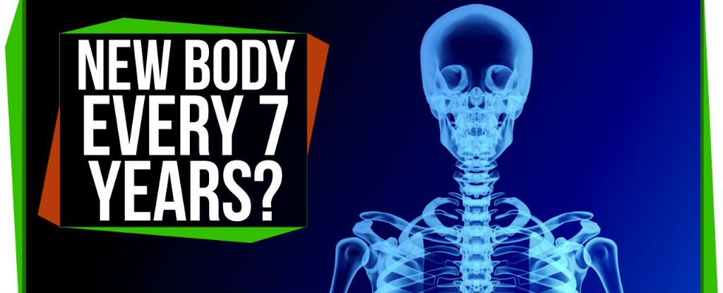 WATCH: Does Your Body Really Regenerate Itself Every 7 Years?