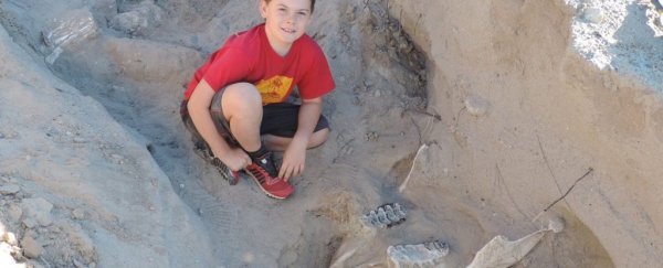 These boys thought they'd found a 'big, fat, rotten cow'. It was a 1 million-year-old Stegomastodon