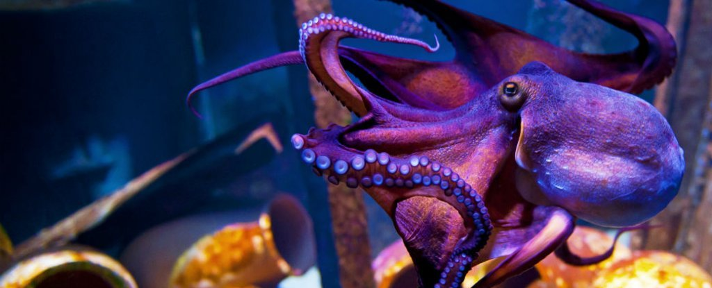 Octopuses Are Able to 'See' With Their Skin, New Research ...