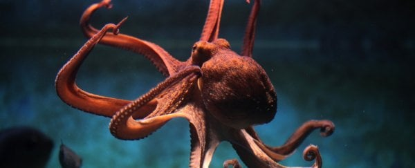 This amazing new material changes shape just like an octopus