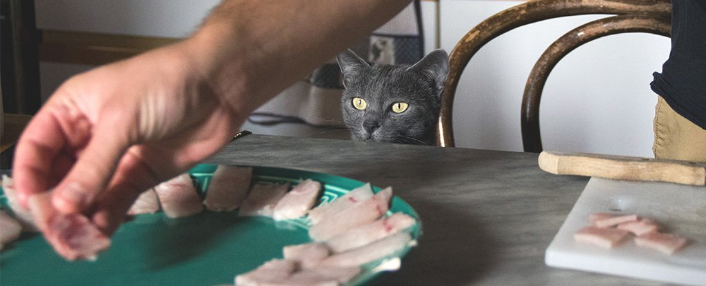 Feeding Your Cat or Dog a Raw Meat Diet Could Actually Be Dangerous