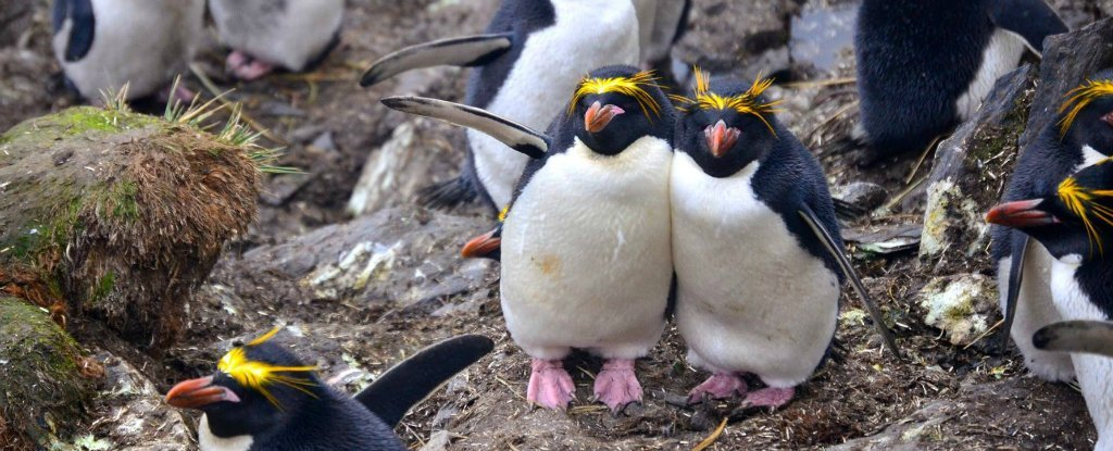 Scientists Need Your Help Looking at Photos of Adorable Penguins. Seriously