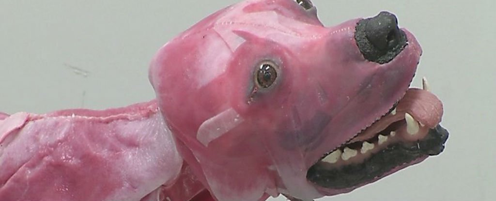 This New Synthetic Dog Breathes, Bleeds, And Dies For Veterinary Students