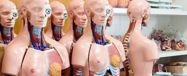 Our knowledge of our own anatomy is really bad – here's why it matters