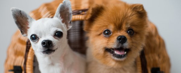 Want a happier marriage? Look at cute pictures of puppies!