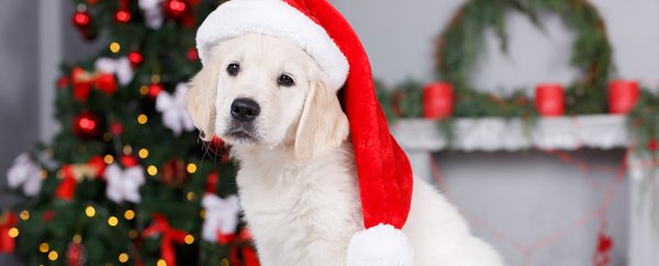 A Puppy For Christmas.Here S Everything You Need To Consider Before Buying A Puppy