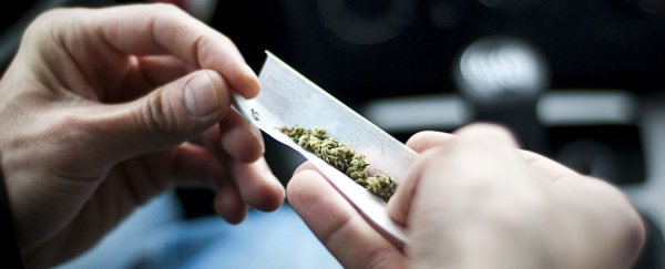 marijuana is much safer than alcohol and tobacco new study finds