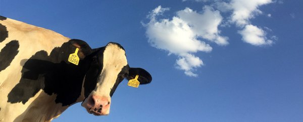 This new power plant will produce clean energy from cow manure