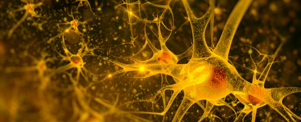 Schizophrenia found to be caused by faulty helper cells in the brain
