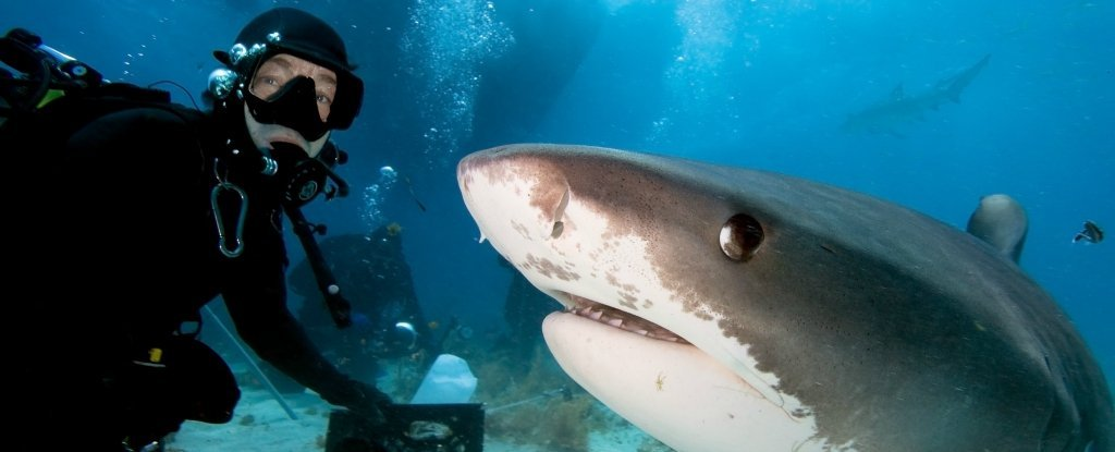 Selfies Have Killed More People Than Sharks This Year, Reports Show