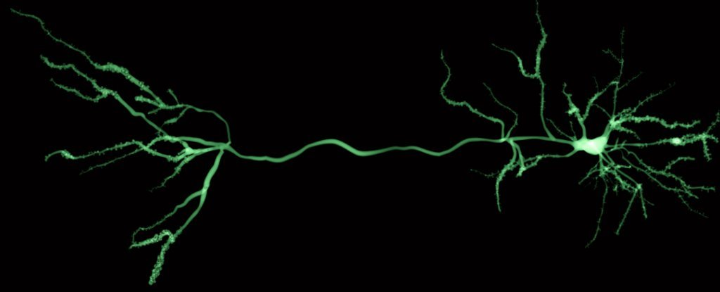 Scientists Have Built Artificial Neurons That Fully Mimic Human Brain Cells