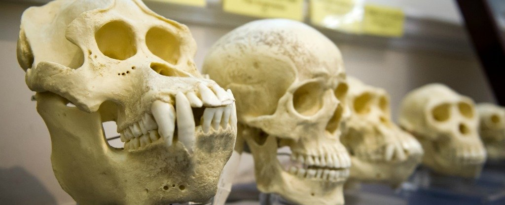 Here's Why We Should Actually Listen to Creationists About Evolution