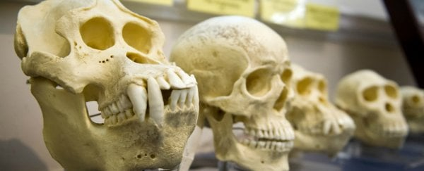 Listening to creationists can strengthen our own understanding of evolution