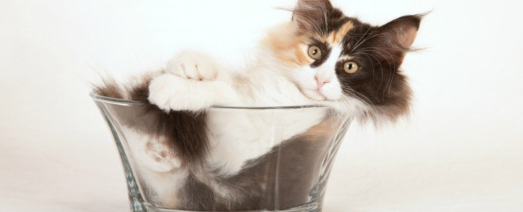 Scientists Finally Answer The Important Question, Are Cats a Liquid?