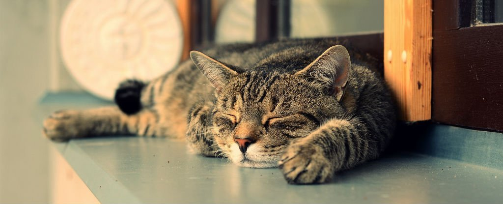 These Are The Signs That Your Cat Will Probably Live A Long Life