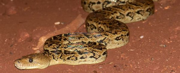 Turns out, snakes can hunt in packs, so let's just all move to Antarctica
