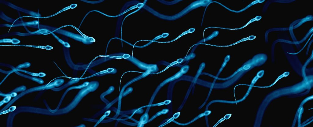 Scientists Have Made The Best Artificial Sperm Yet  And
