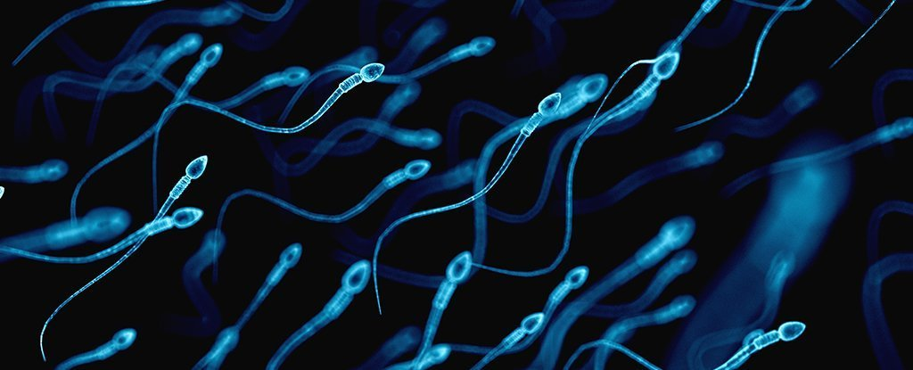 Are Heathy sperm cells