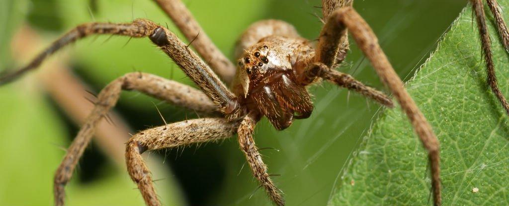 Spiderso