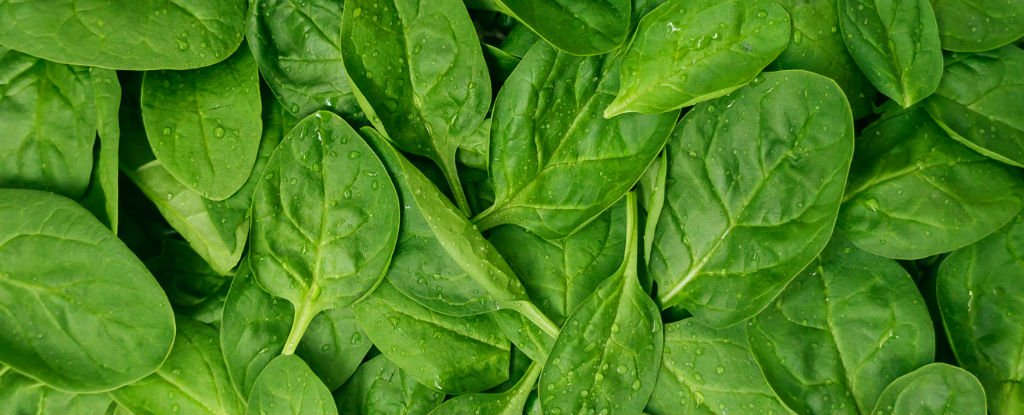 Here's Why Leafy Green Vegetables Are Key For Good Digestion